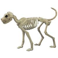 Buster Bonez Dog Skeleton Decoration